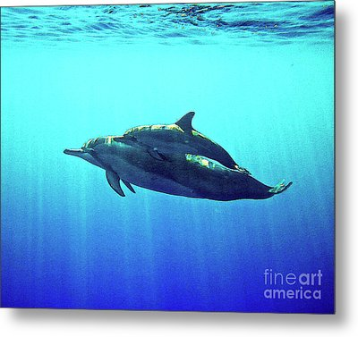 Spinner Dolphin With Baby Metal Print