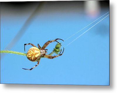 Spinning The Web Metal Print by Charles Ables