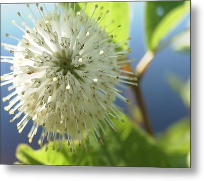 Spiral Beauty Metal Print by Martha Ayotte