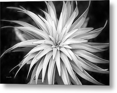 Metal Print featuring the photograph Spiral Black And White by Christina Rollo