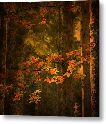 Metal Print featuring the photograph Spirit Fall by Philippe Sainte-Laudy