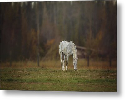 Metal Print featuring the photograph Spirit Horse by Debby Herold