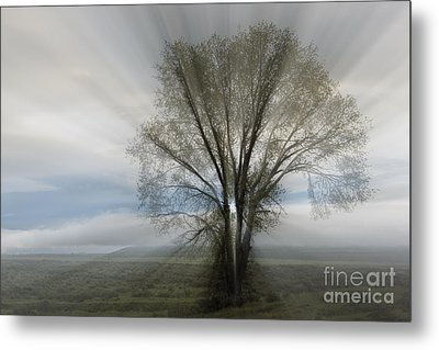Metal Print featuring the photograph Spirit Of Nature by Sandra Bronstein