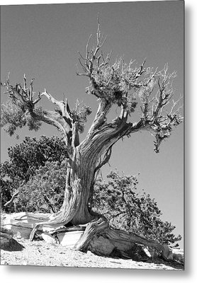Metal Print featuring the photograph Spirit Tree by Maggy Marsh