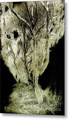 Spirit Tree Metal Print by Paul W Faust -  Impressions of Light