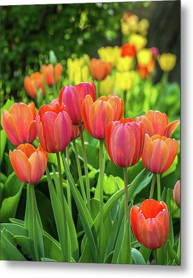Metal Print featuring the photograph Splash Of April Color by Bill Pevlor