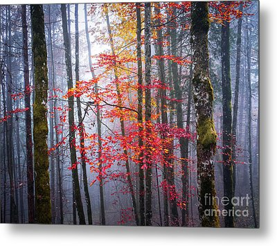 Metal Print featuring the photograph Splash Of Colour by Elena Elisseeva