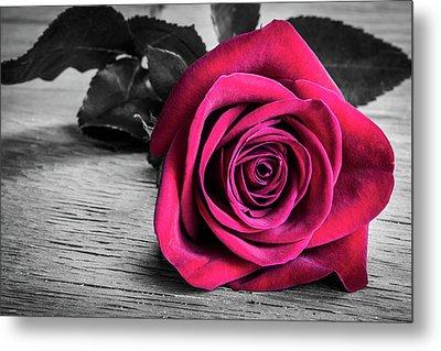 Splash Of Red Rose Metal Print