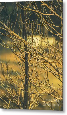 Spooky Country House Obscured By Vegetation  Metal Print by Jorgo Photography - Wall Art Gallery