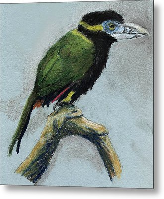 Spot-billed Toucanet Metal Print by Nelson Caramico
