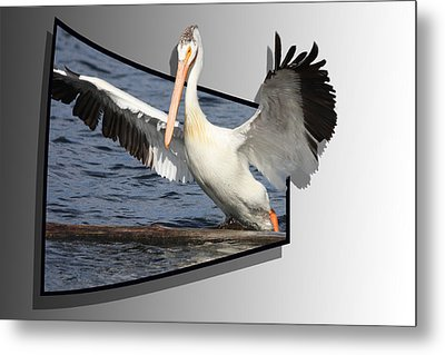 Spread Your Wings Metal Print by Shane Bechler