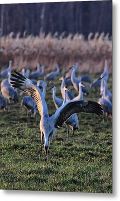 Metal Print featuring the photograph Spread Your Wings by Shari Jardina