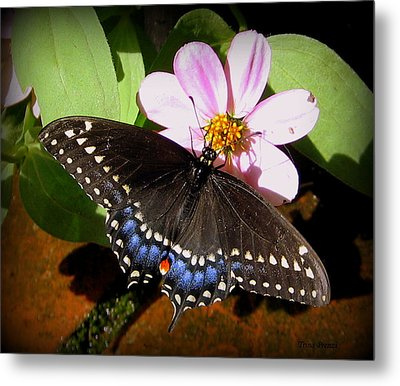 Spreading My Wings Metal Print by Trina Prenzi