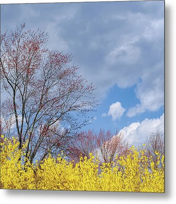 Metal Print featuring the photograph Spring 2017 Square by Bill Wakeley