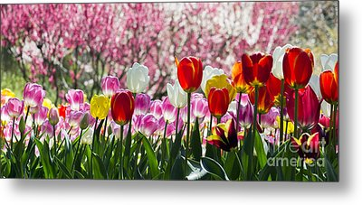 Spring Metal Print by Angela DeFrias