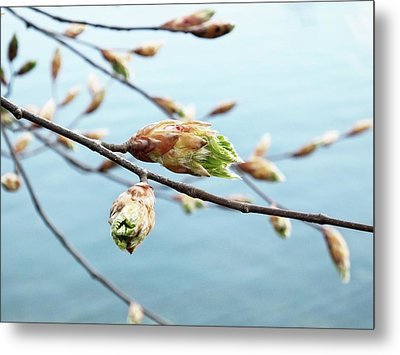Spring At The Lake Metal Print by Karen Stahlros