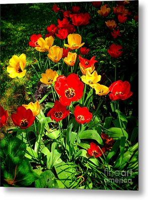 Spring Beauty Metal Print by Olivier Le Queinec