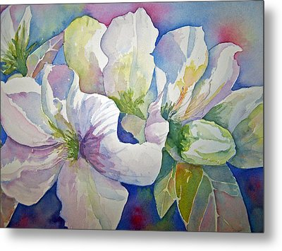 Spring Beauty Metal Print by Sandy Collier
