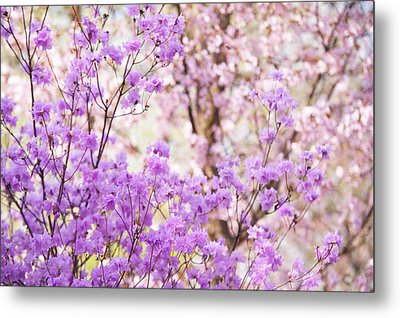 Metal Print featuring the photograph Spring Bloom Of Rhododendron  by Jenny Rainbow