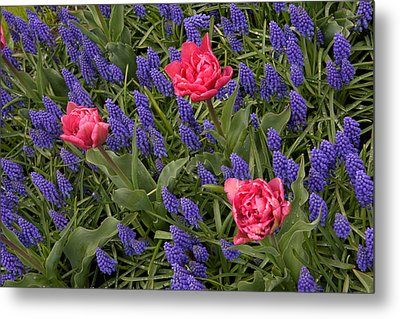 Metal Print featuring the photograph Spring Blooms by Phyllis Peterson
