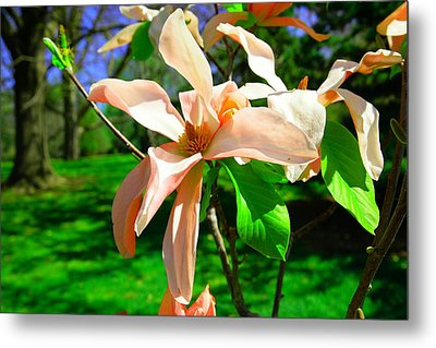 Metal Print featuring the photograph Spring Blossom Open Wide by Jeff Swan