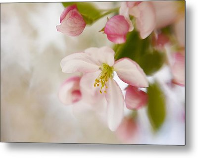 Metal Print featuring the photograph Spring Blossom Whisper by Diane Alexander