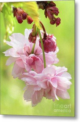 Spring Blossoms 8 Metal Print