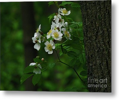 Metal Print featuring the photograph Spring Blossoms by Deborah Johnson