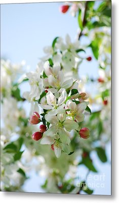 Metal Print featuring the photograph Spring Blossoms  by Lila Fisher-Wenzel