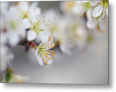 Spring Blossoms Metal Print by Nailia Schwarz