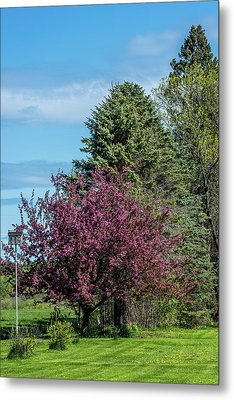 Metal Print featuring the photograph Spring Blossoms by Paul Freidlund