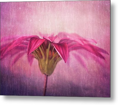 Metal Print featuring the photograph Spring Blush by Amy Weiss