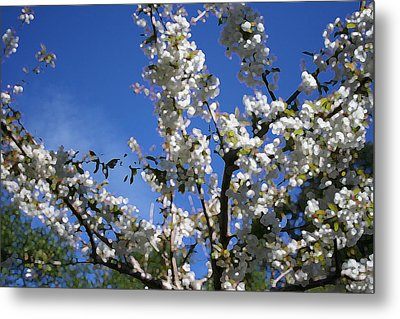 Spring Cherry Blossoms Metal Print by Mary Gaines