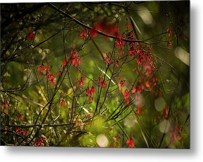 Spring Color Metal Print by Marvin Spates