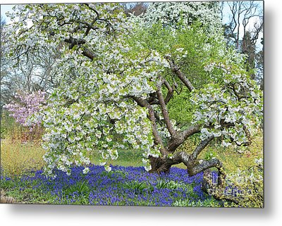 Metal Print featuring the photograph Spring Color by Tim Gainey