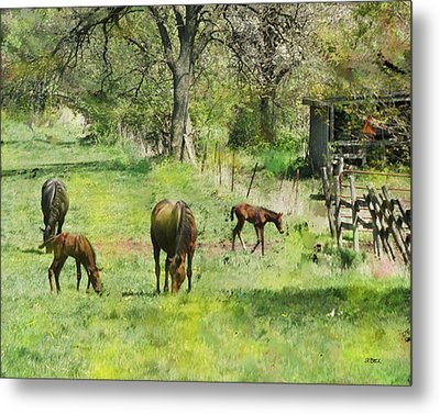 Spring Colts Metal Print