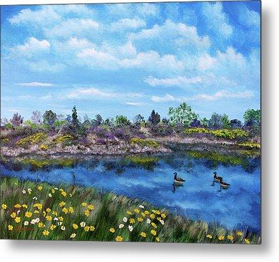Spring Daisies At Los Gatos Lake Metal Print by Laura Iverson