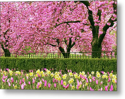 Metal Print featuring the photograph Spring Extravaganza by Jessica Jenney