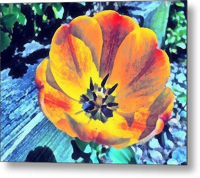 Metal Print featuring the photograph Spring Flower Bloom by Derek Gedney