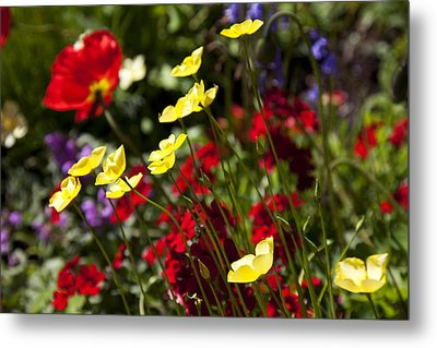 Spring Flowers Metal Print by Garry Gay