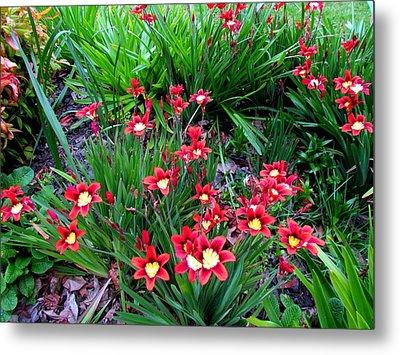 Spring Flowers Metal Print by Joyce Woodhouse