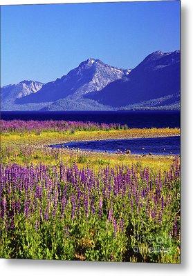 Spring Flowers Lake Tahoe Metal Print by Vance Fox