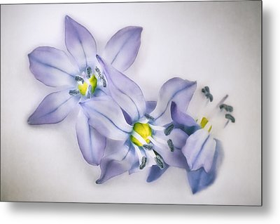 Spring Flowers On White Metal Print