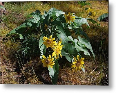 Metal Print featuring the photograph Spring Flowers by Sergey and Svetlana Nassyrov