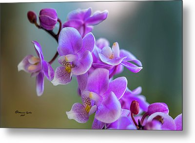 Metal Print featuring the photograph Spring For You by Marvin Spates