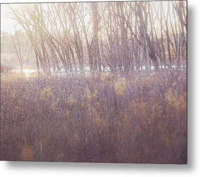 Spring Frost Metal Print