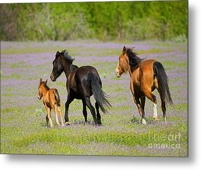 Spring Gallop Metal Print by Mike Dawson