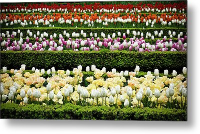 Metal Print featuring the photograph Spring Garden - Colorful Tulips by Frank Tschakert