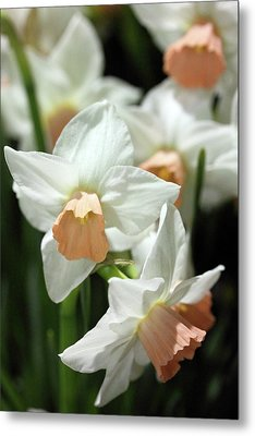 Spring Has Spring Metal Print by Mary Haber