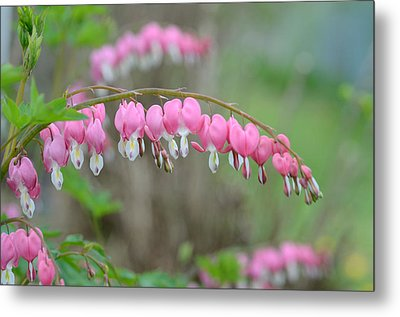 Spring Hearts Metal Print by Janet Rockburn